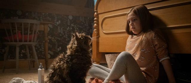 gato e garota